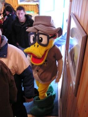 Our mallard mascot, Drake.