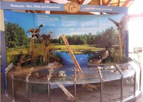 Wetland display in the Interpretive Centre
