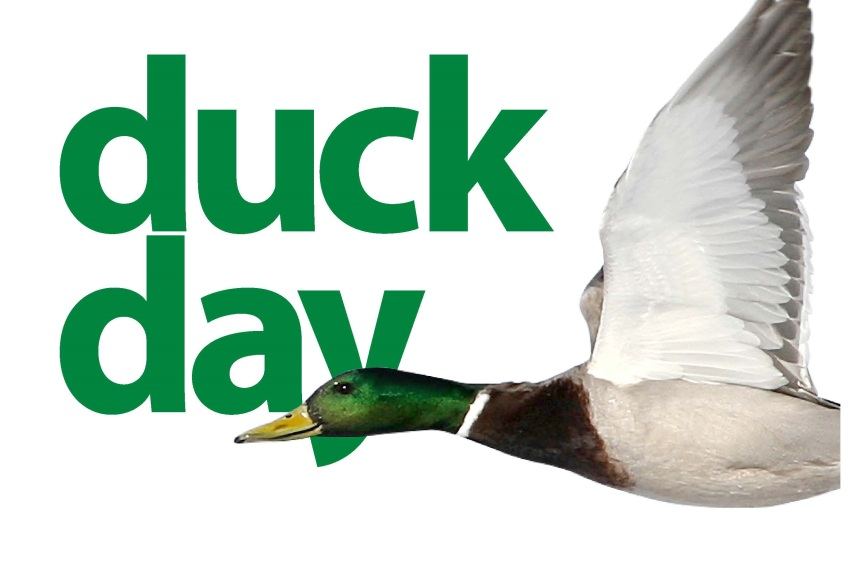 duckday-shubie-cropped